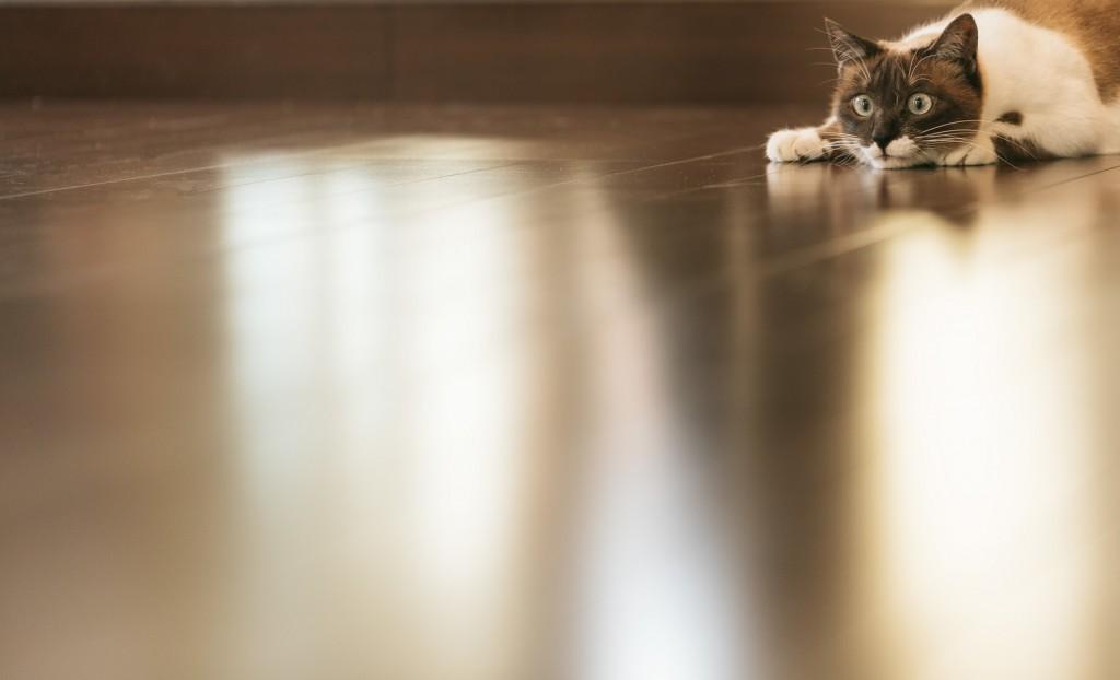 cat9V9A8987_TP_V